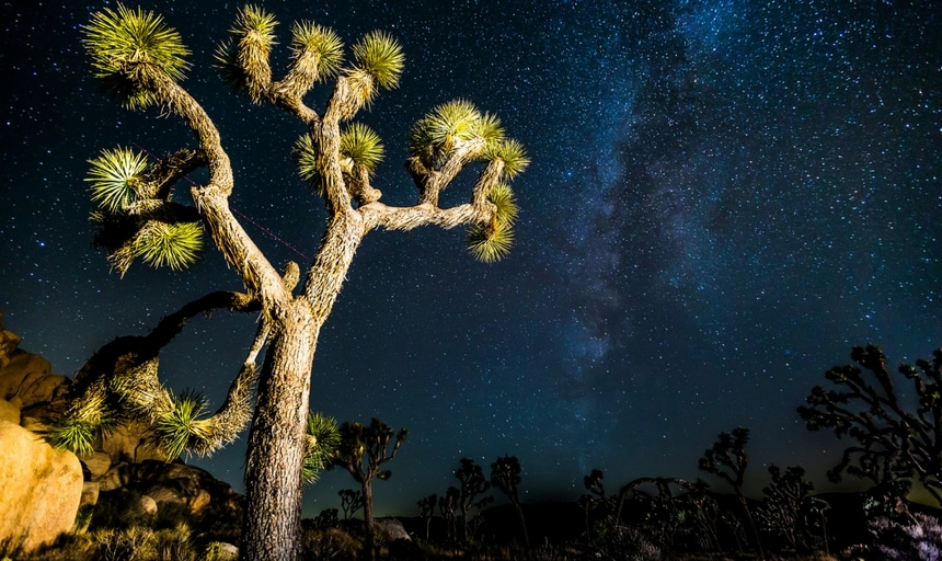 Joshua Tree, CA (USA)