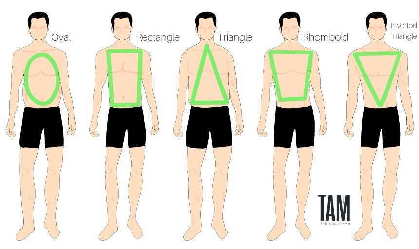 Men's Body Shapes