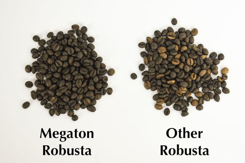Megaton Robusta vs Other Robusta Coffee Beans Comparison